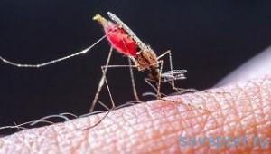 Как избавиться от паразитов в организме медикаментозно