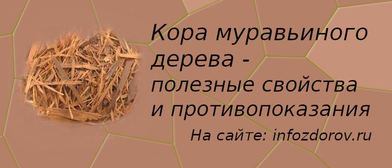 Кора муравьиного дерева полезные свойства и противопоказания