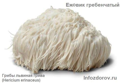 Ежевик гребенчатый - отзывы