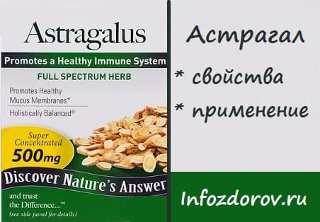 Астрагал - лечебные свойства и применение