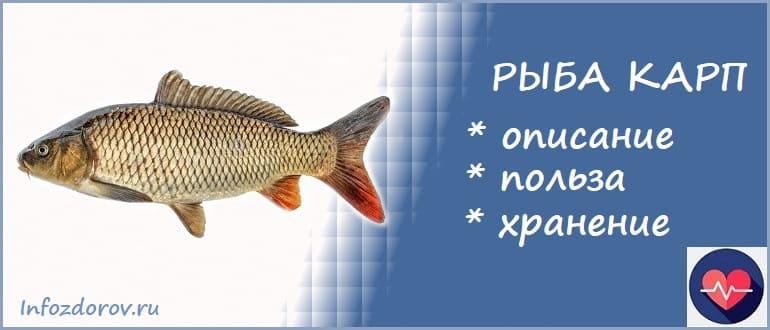 Рыба карп - польза